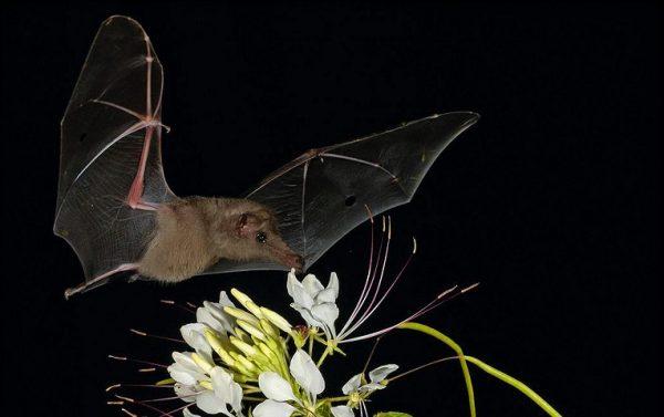 خفاش 4