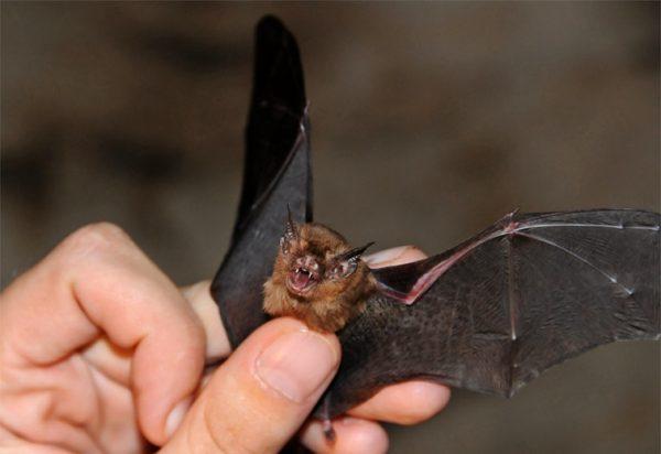 خفاش 5