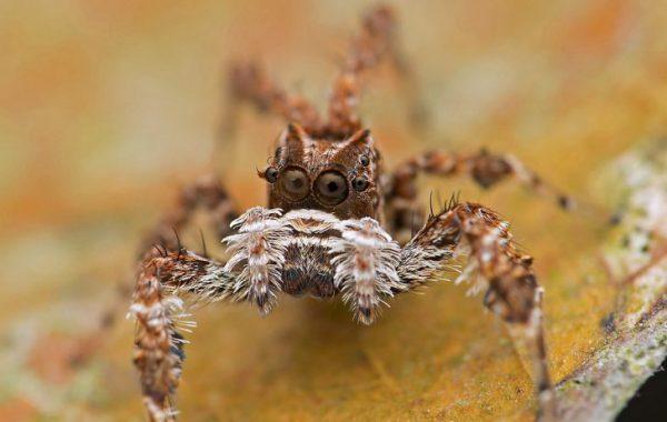 باهوشترین حیوانات جهان : عنکبوتهای جهنده