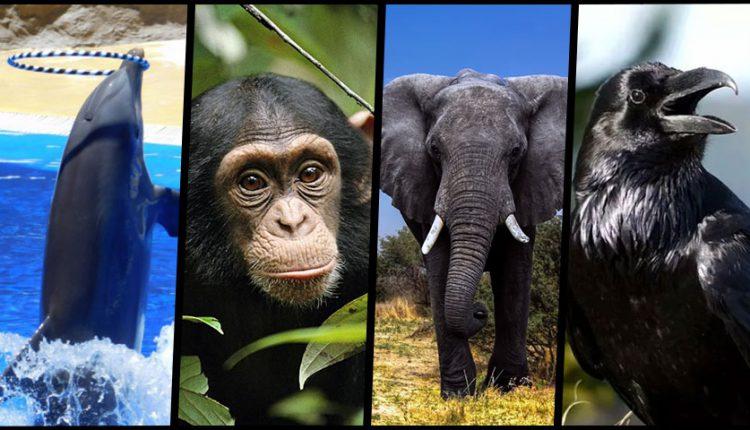 باهوش ترین حیوانات جهان