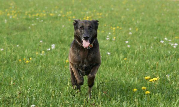 باهوشترین حیوانات جهان : سگها