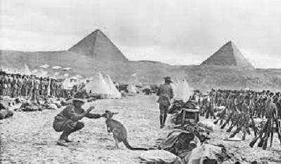 کانگورو مصری