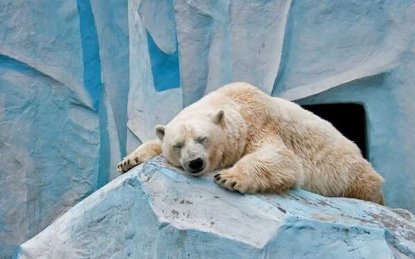 خرس قطبی6