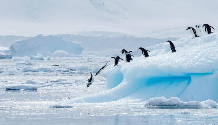 دانستنی های جالب از قطب جنوب