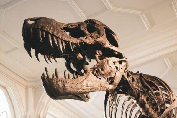 10 نکته و دانستی جالب در مورد فسیل ها