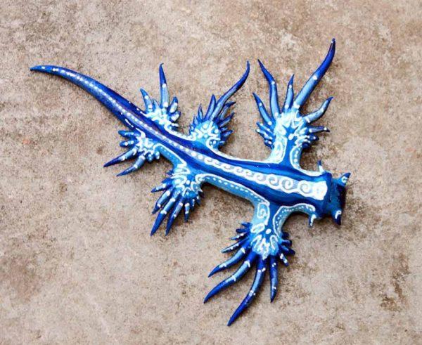 اژدهای آبی رنگ