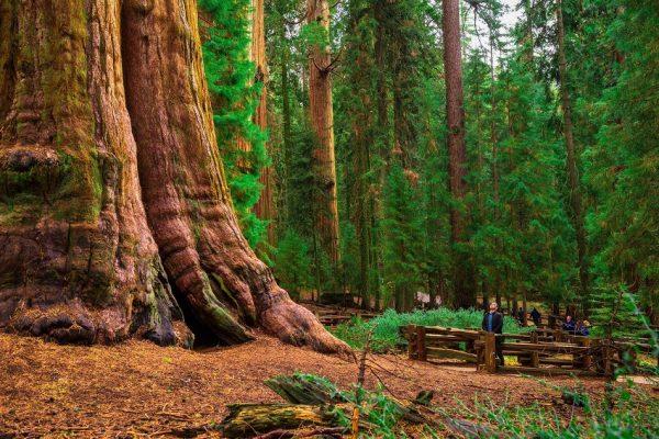 با کهنسال ترین درختان دنیا آشنا شوید
