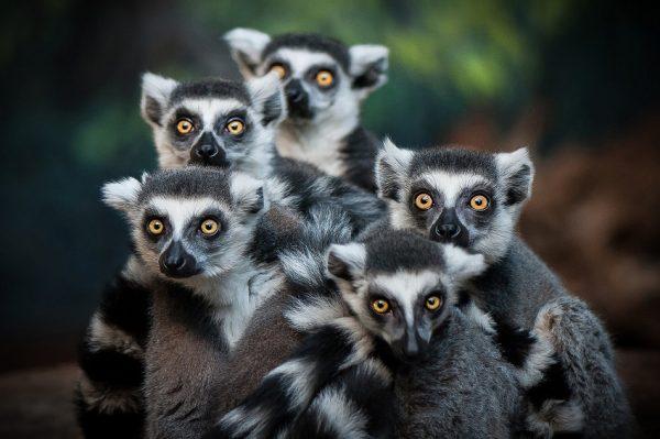 با 30 حقیقت جالب در مورد ماداگاسکار آشنا شوید