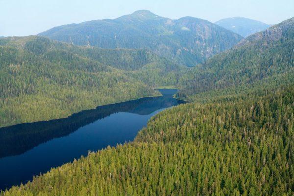 با زیباترین جنگل های جهان آشنا شوید