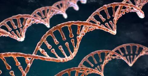 14 دانستنی جالب در مورد DNA ژنوم