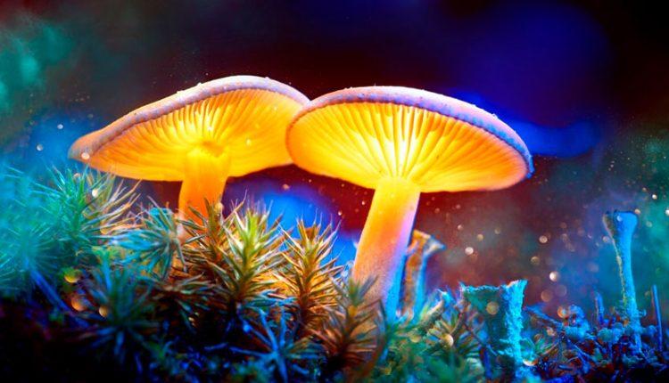 حقایقی جالب در مورد قارچ ها